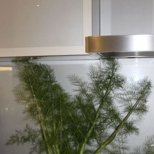 Healthy Eating: Fresh picked Fennel